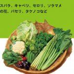 haruyasai-672x372