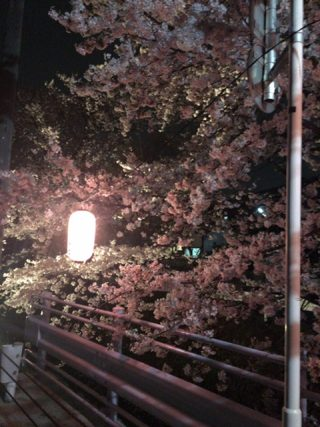 桜開花予想♪